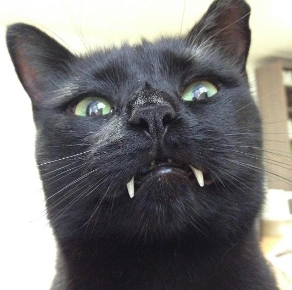 monk the vampire cat 9