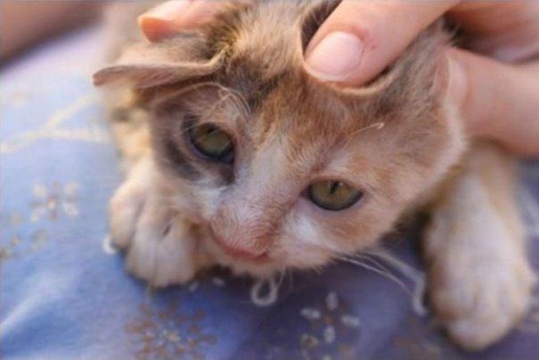 turkey cat 6