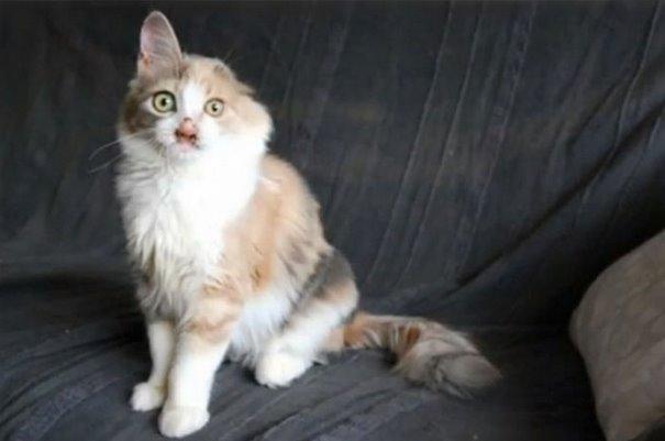turkey cat 8