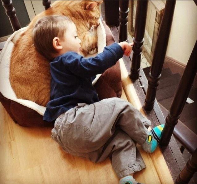 larry the cat 4