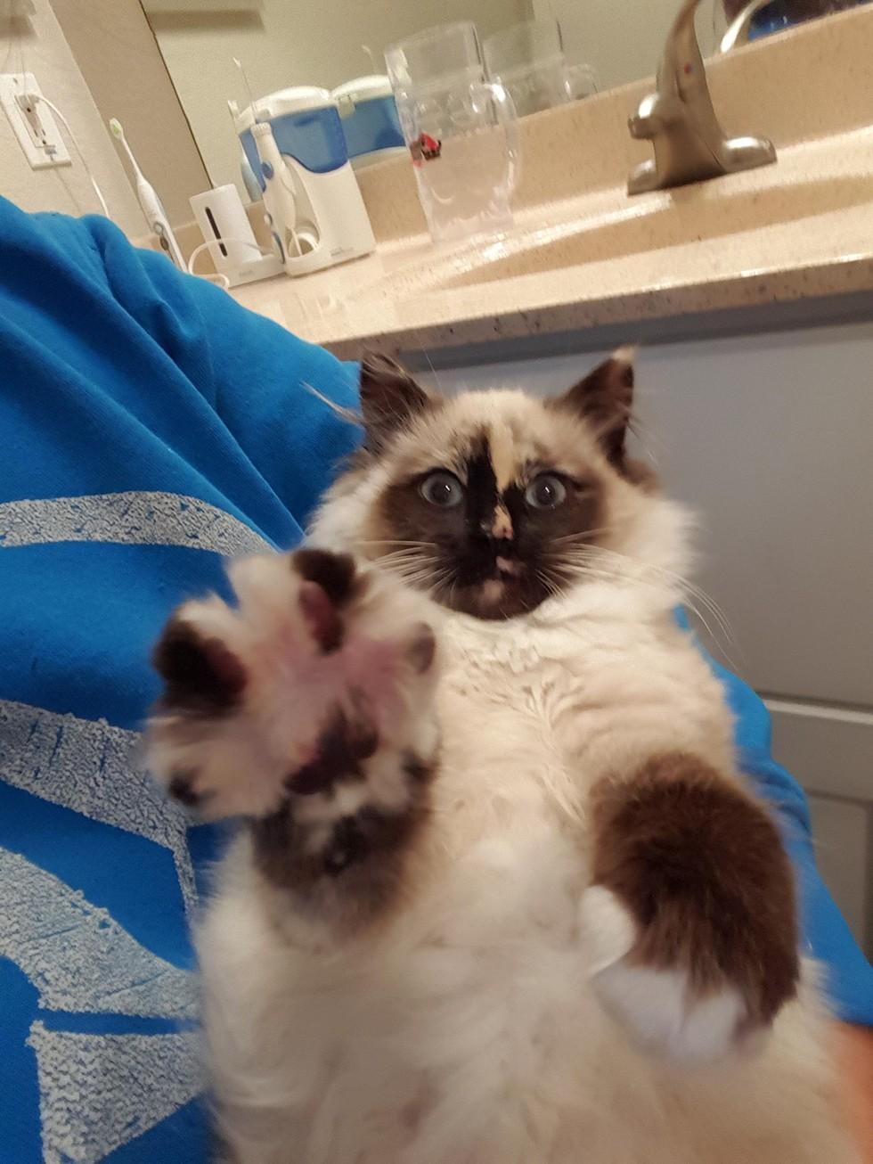 regent the cat 2
