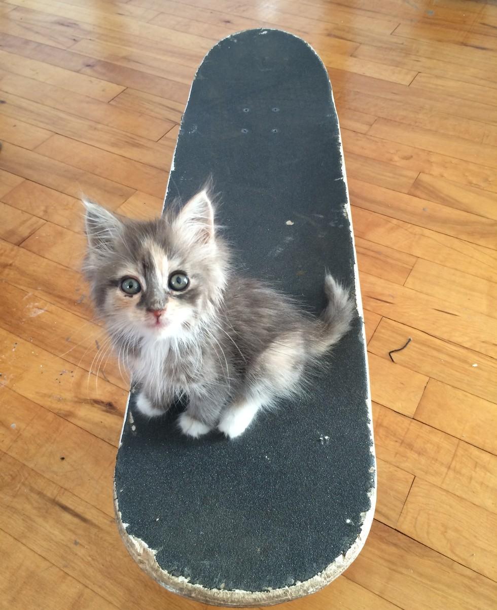 margot the kitten 5
