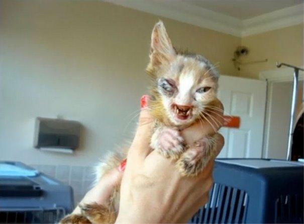 turkey cat 1