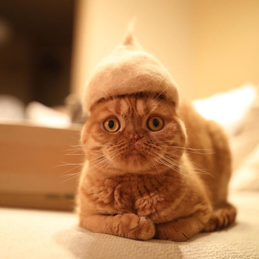 98+ Tin Foil Hat For Cats Archie Mcphee. Tiny Hats On Cats Because ... 42ca2fd363f1