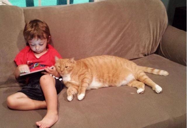 larry the cat 8