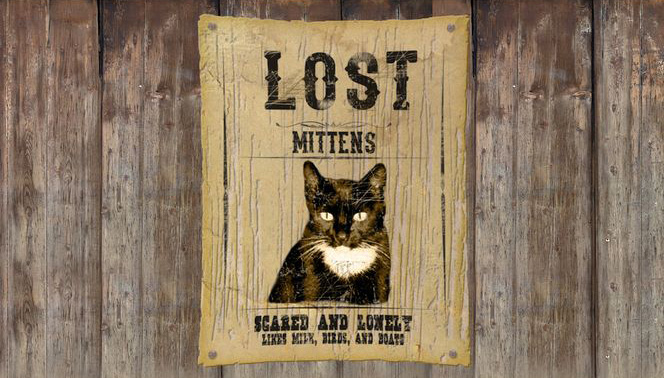 mittens the lost cat