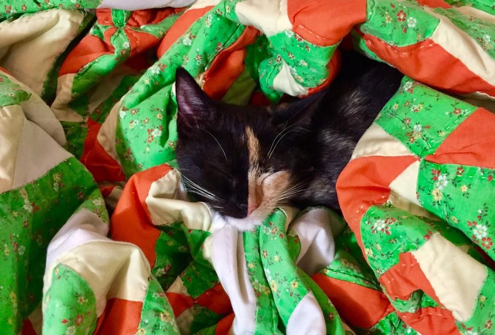 callie the kitten 8