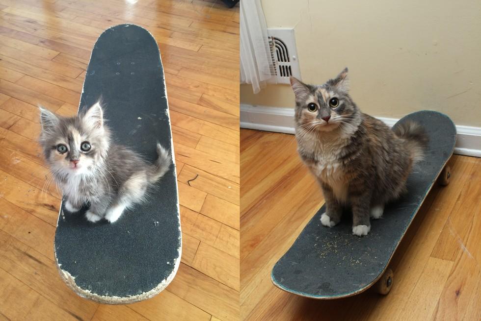 margot the kitten and cat