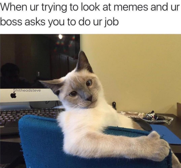 Best Cat Meme Of All Time