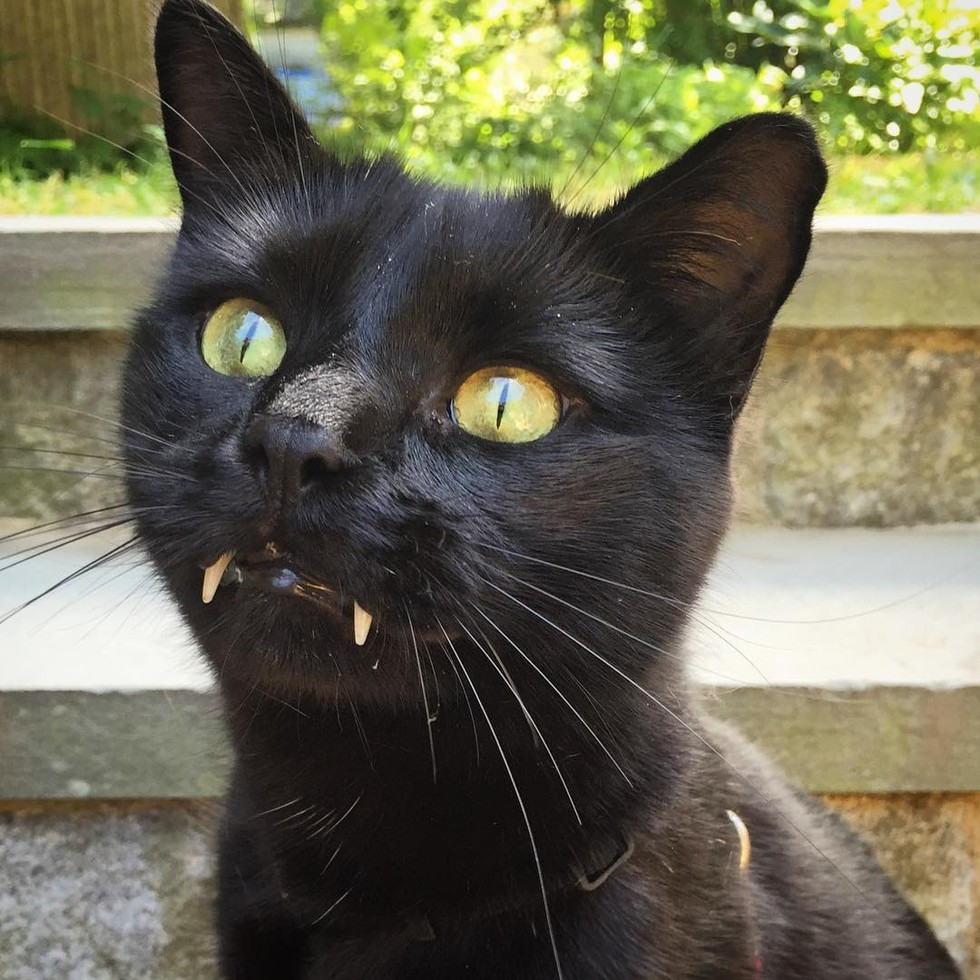 monk the vampire the cat