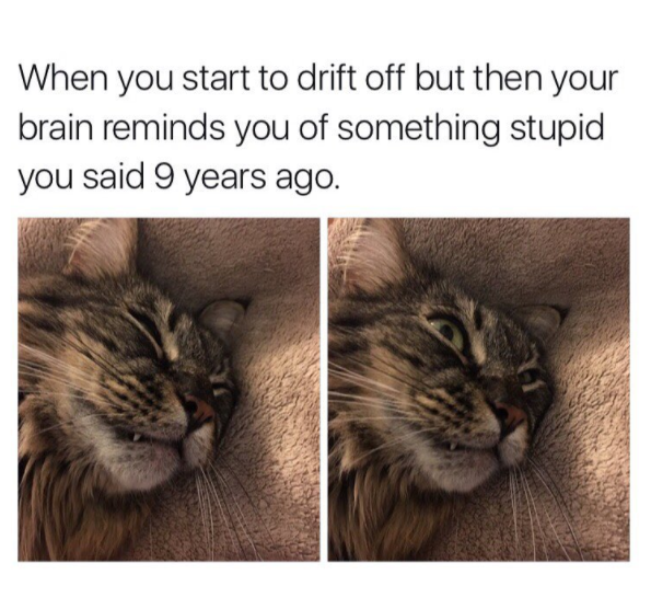 15 Cat Memes That Are Super Relatable
