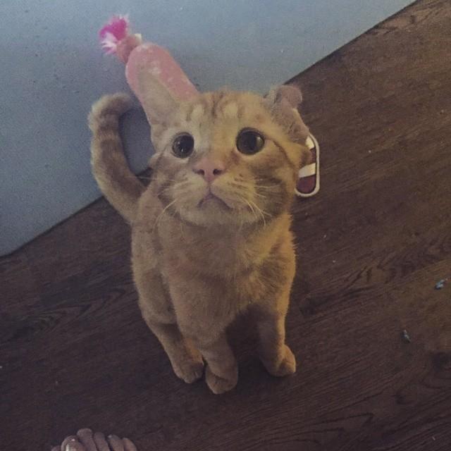 benben the cat 7