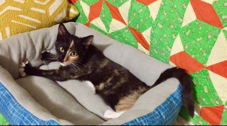 callie the kitten