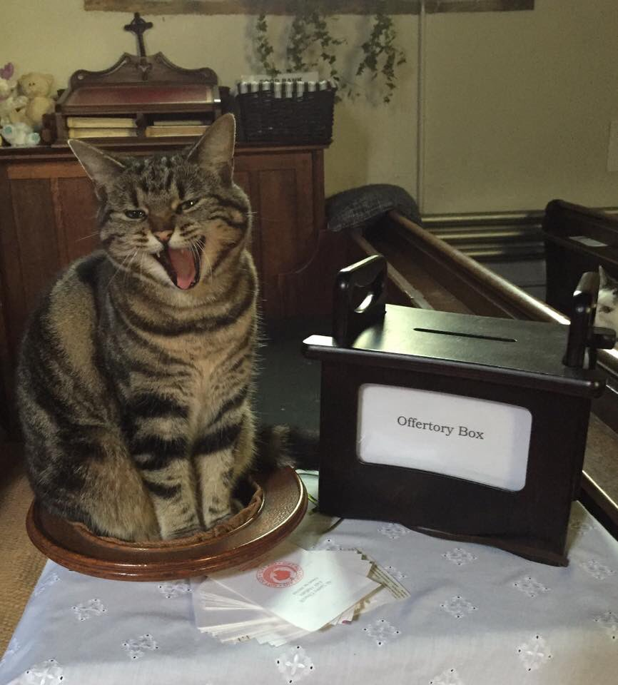 church cat on offering plate
