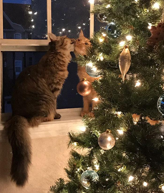 kitten love 1