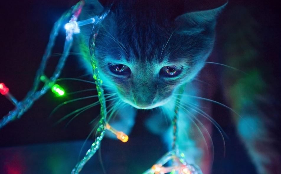 christmas cat light1