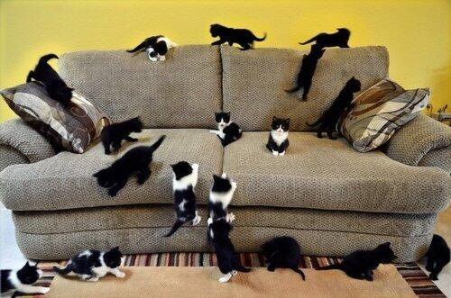 cat fact 9