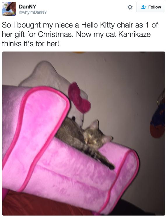 xmas cat gift 11
