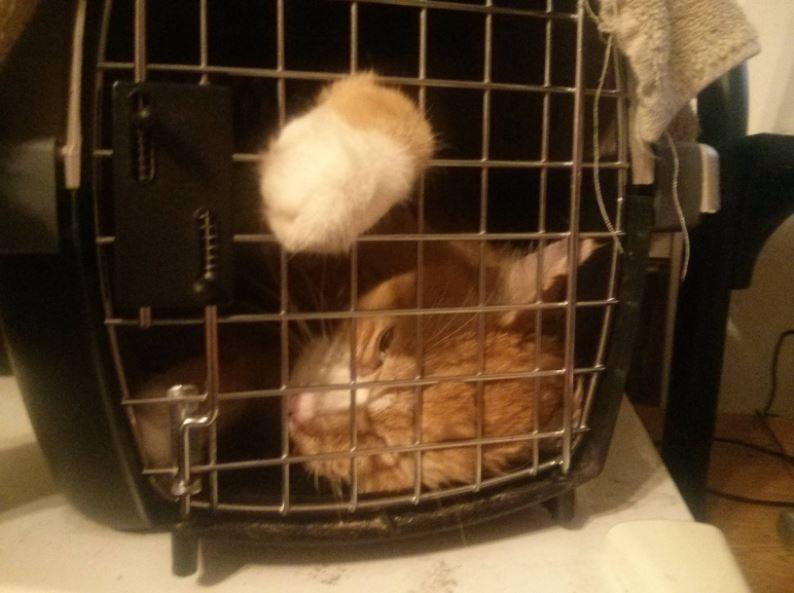 newton the senior cat 2