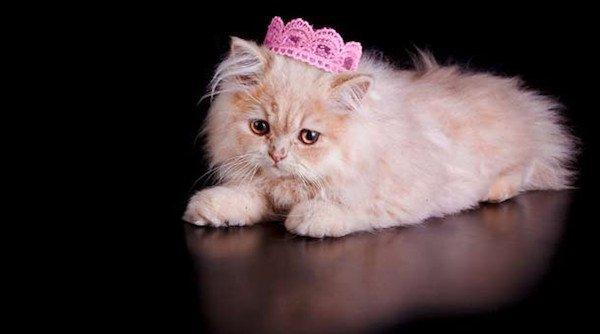 cat fact 6