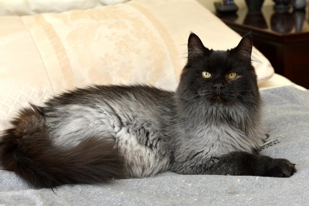 jameson the cat 4
