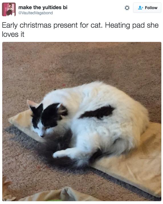 xmas cat gift 5