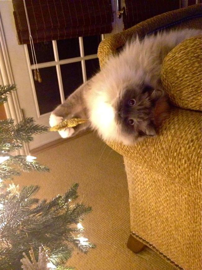 cat christmas lights7