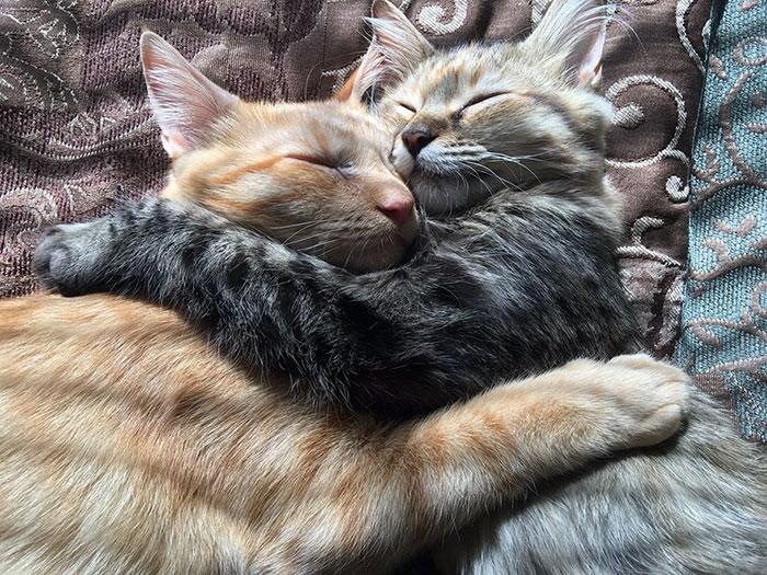 kittens in love 2
