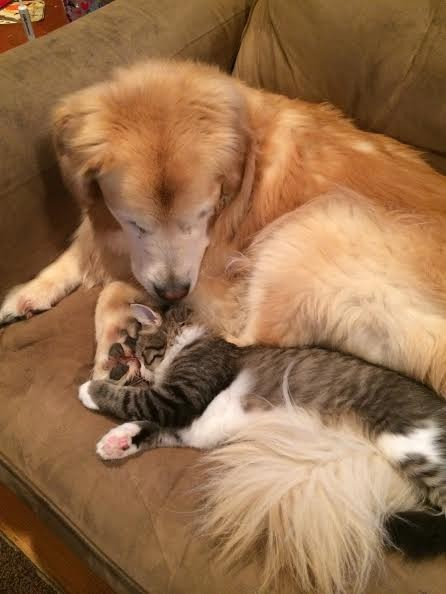 pete the kitten with lucy the dog