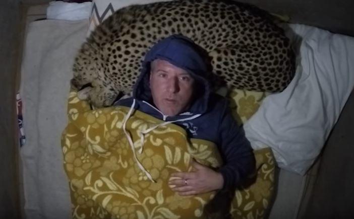 cheetah pillow 4