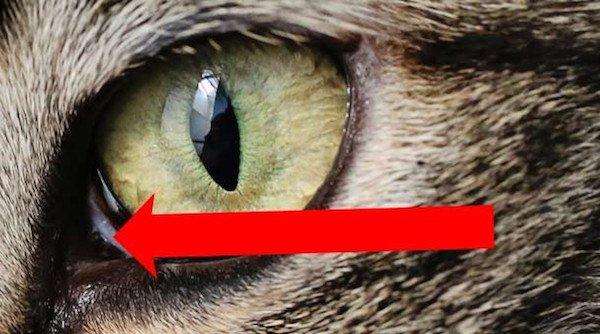 cat fact 3