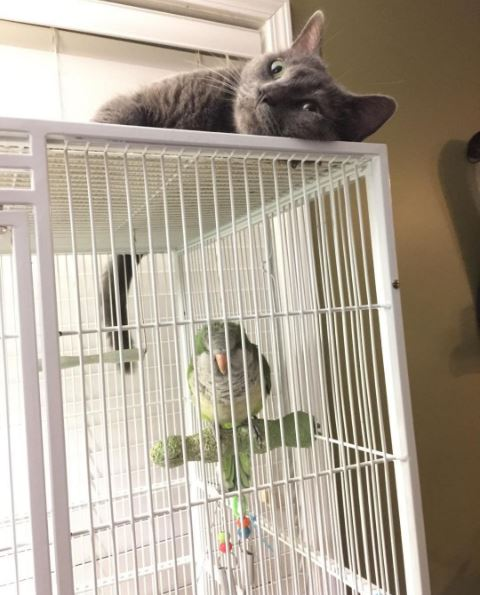 parrot and cat hanging out