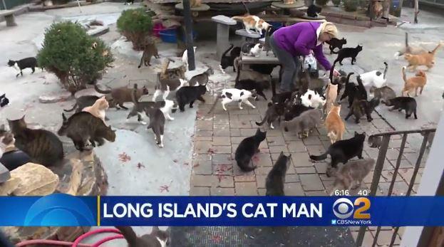 Happy Cat Sanctuary 1
