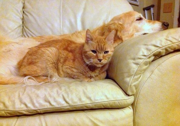 forsberg and ginger snuggling on the couch