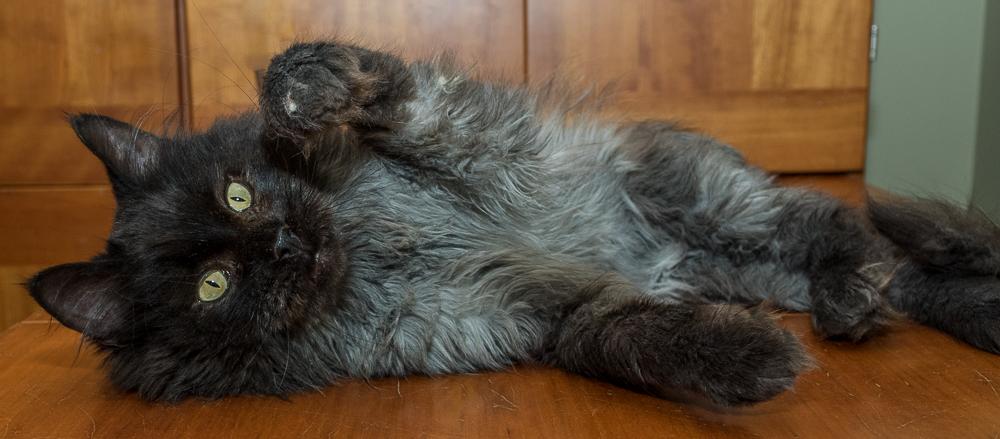 jameson the cat 3