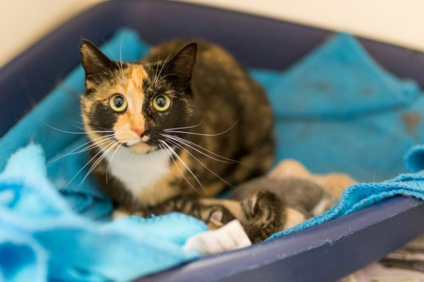 pepper the cat watching over her kittens