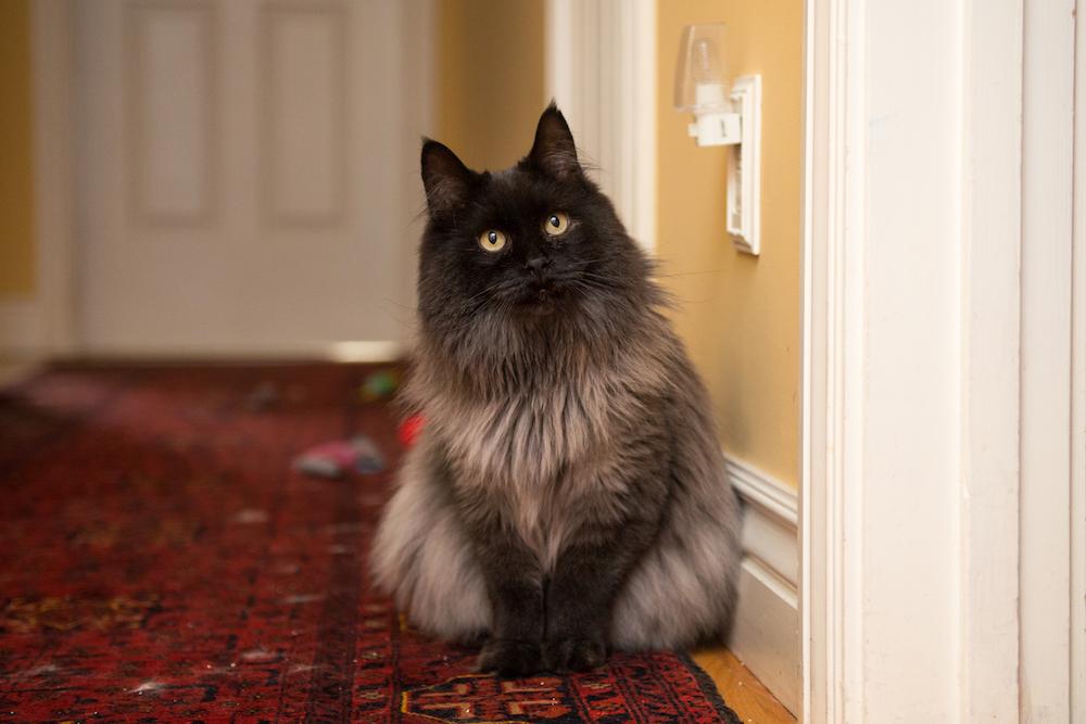 jameson the cat 6