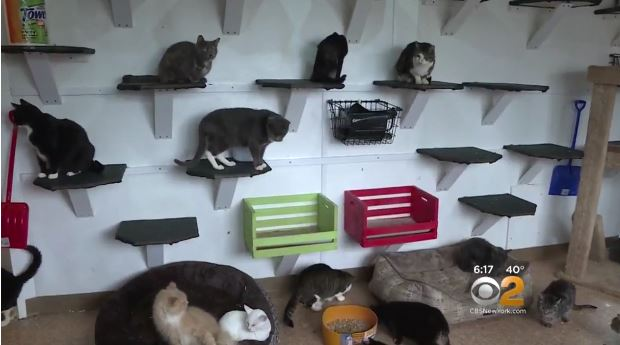 Happy Cat Sanctuary