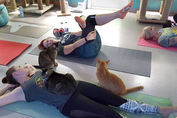cat yoga 1
