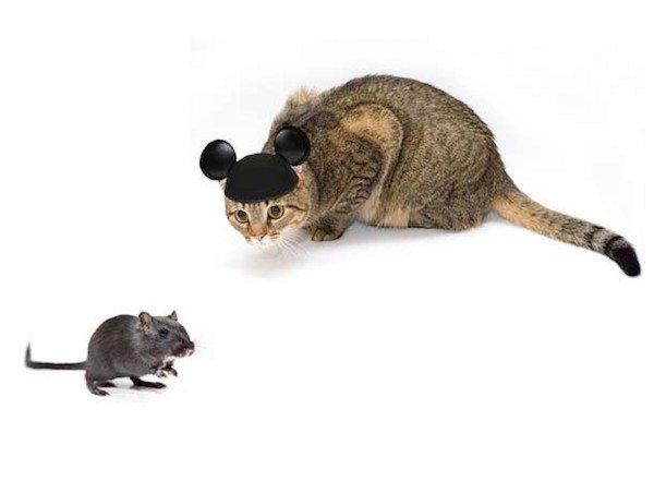 cat fact 7