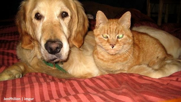 forsberg and ginger relaxing together