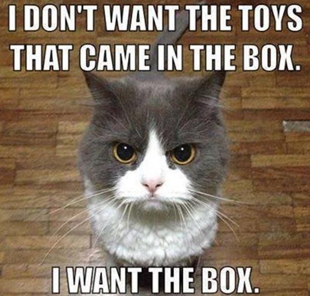 xmas cat gift 12