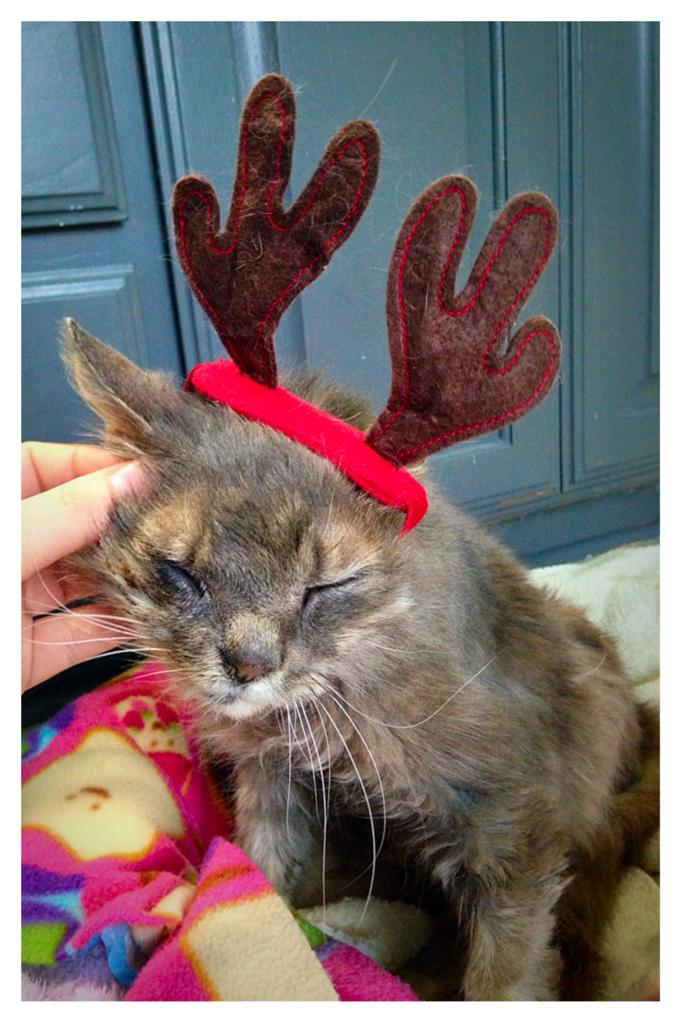 bonnie the reindeer