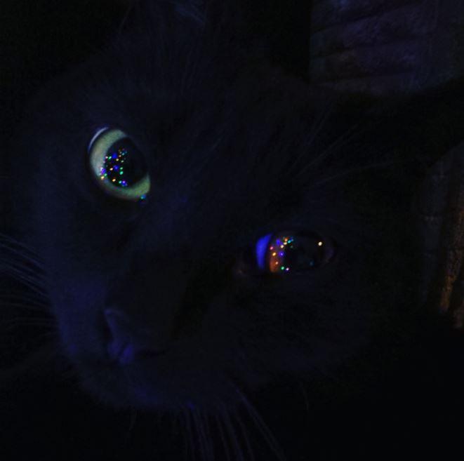 christmas cat lights2