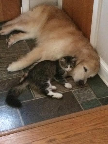 pete the kitten and lucy the dog snuggling