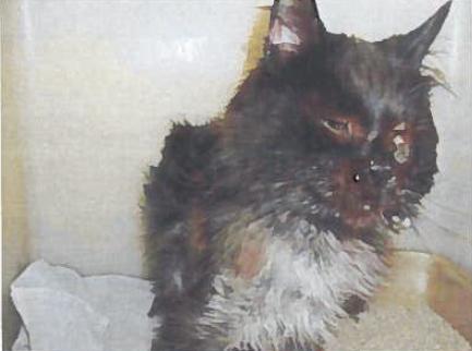 jameson the cat 1