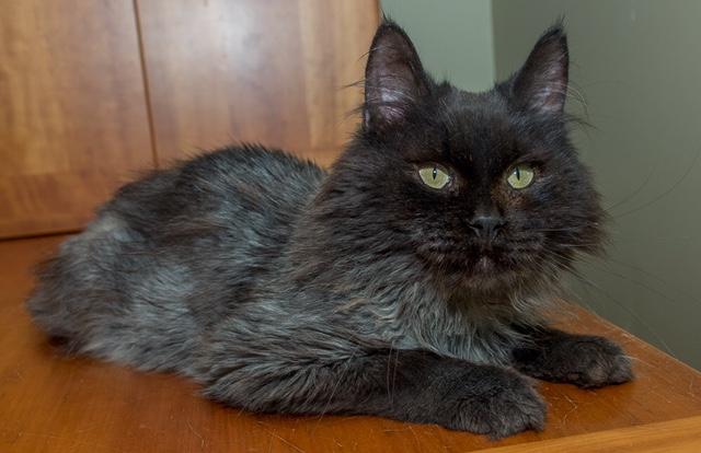 jameson the cat 2