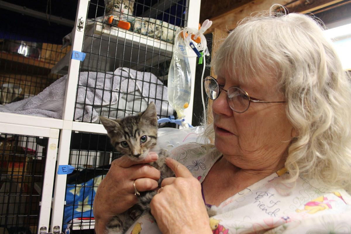 cat shelter rescue 1