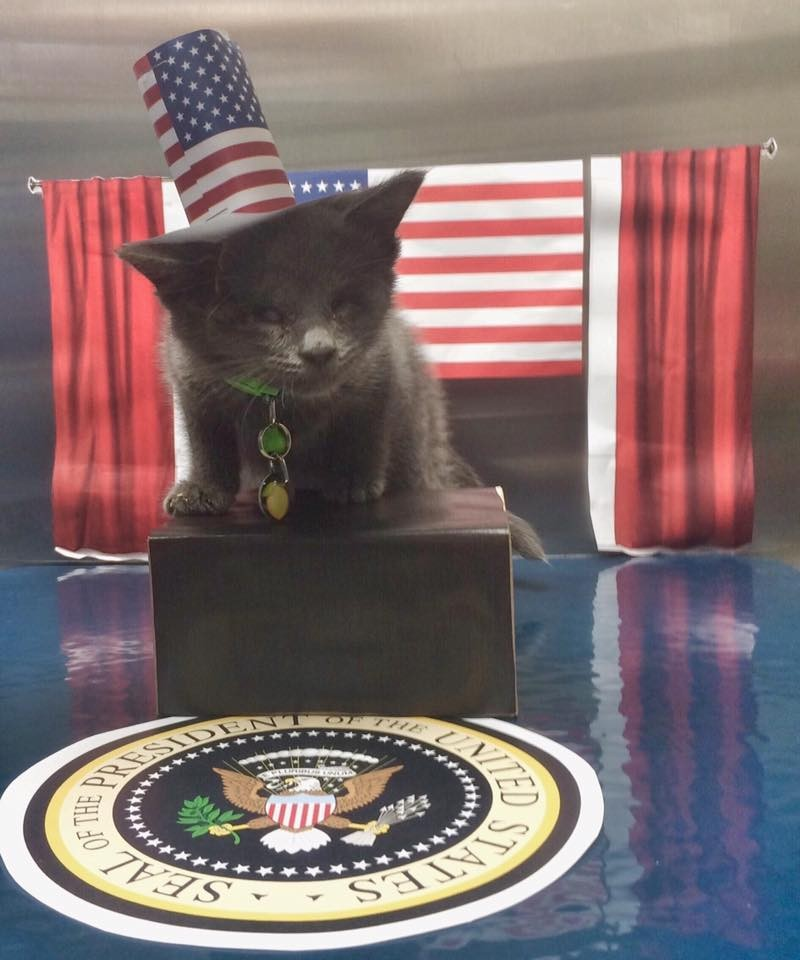 lemon the kitten as president