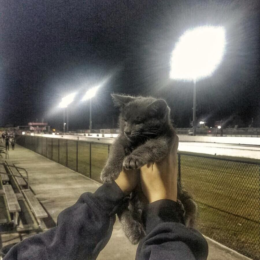 lemon the kitten at a race track